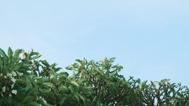 Řada ze zelených stromů a keřů proti modré obloze. Střela. Zelené keře na pozadí oblohy