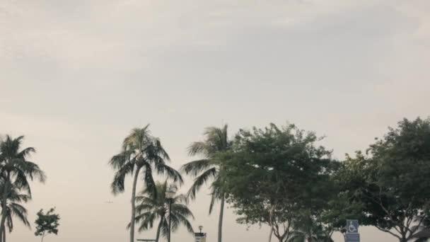 Palem na slunce světlo. Střela. Pohled z palem proti obloze při západu slunce. Tropické palmy houpat se ve větru při západu slunce