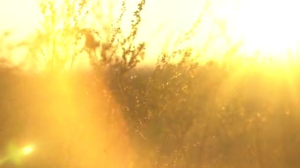 wildes Gras mit Gegenlicht in goldenem Sonnenlicht. Landschaft mit trockenem Steppengras. Steppengras in der Sonne
