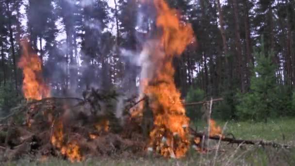Detail spalování borovice. Scénu. Oheň z větví v doménové struktuře. Koncept požárů v lese. Nebezpečná zapalování ohně hořlavá látka