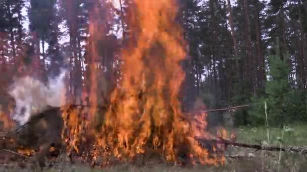 Hasiči auta ohněm. Zapalte stromek jehly nebezpečné lesa. Scénu. Nebezpečný aktivní odpočinek na přírodě s ohněm. Rychlé reakce hasičů k požáru v lese