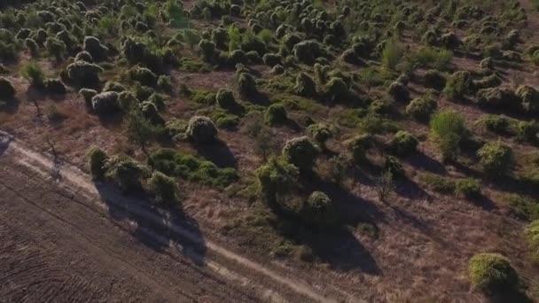 A légi felvétel a szürke mezők cserjék. Lövés. A légi felvétel közvetlenül a fenti zöld bokrok narancsfák sorok. Mezőgazdasági területek, megművelt föld