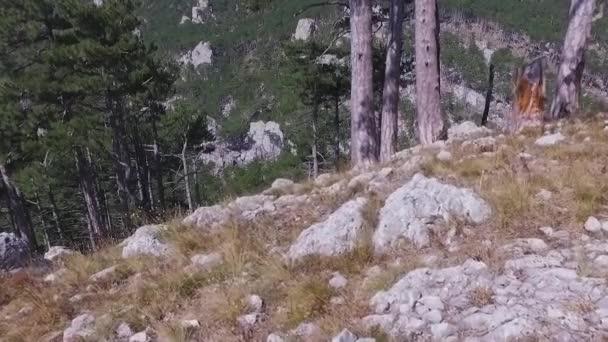 Őszi erdő légifelvételek. Lövés. Tűlevelű erdők fa háttér ködös vad erdőben fekvő utazik fogalom. Egy örökzöld erdők fölött Utcarészlet
