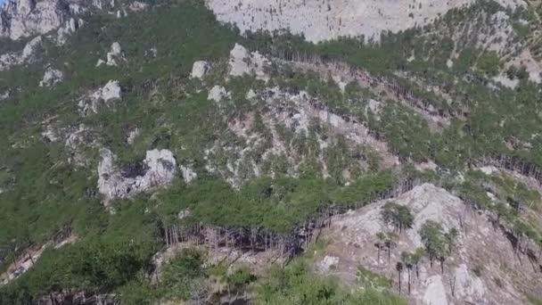 Vista aerea di autunno foresta. Colpo. Foresta di conifere albero sfondo nebbiosi boschi selvatici paesaggio concetto di viaggio. Vista aerea sopra la testa di un bosco di montagna sempreverde