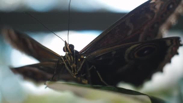 Pillangó zöld levél ül. Keret. A batterfly makró