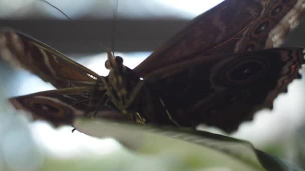 Motýl na zelený list. Makro batterfly