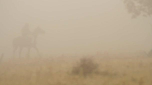 Kovboj koni přes pole se svým psem v mlze. Střela. Ovce pastýř, jízdu na koni, na venkově v mlhavé oblasti se svým psem