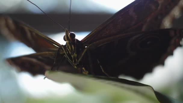 Detail krásného motýla s teplou soft zaměření. Rám. Černý motýl venku