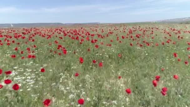 Nyári táj a mező, a piros pipacs virágok és a kék ég. Lövés. Kilátás gyönyörű mák iktatott és kék ég nyári vidéken