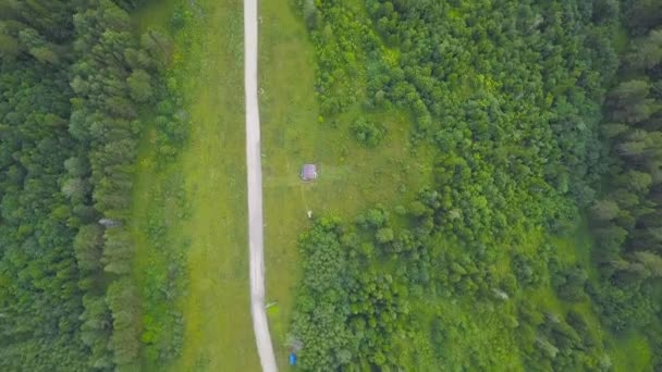 Top view of rural road in green forest. Clip. Country road between avenue of trees of green forest in rural countryside