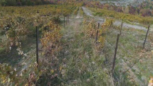 Vinice na podzim. Střela. Krásný výhled z hroznů polí
