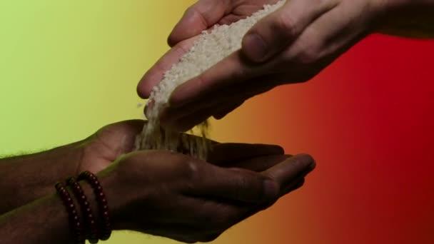 Ruce z bílého muže zrn rýže dát jinou rukou afroamerican, izolované na světlé pozadí. V UK. Vylévající rýže z rukou do rukou, humanitární pomoc, pomoc chudým zemím koncept