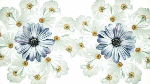 Animáció repülő reális virágok rügyek a fekete háttér. Animáció gördülékeny, színes virág motion grafika való virág mintával