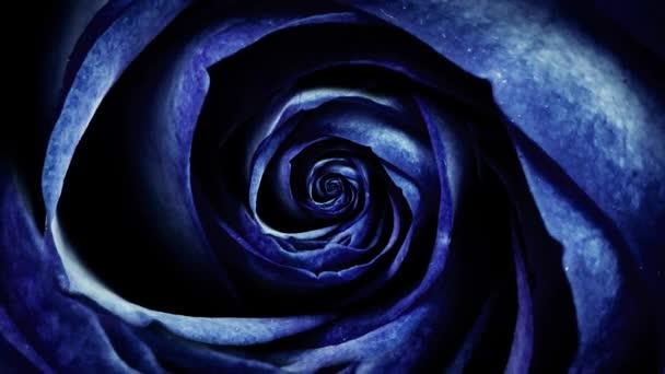 Abstrakt tmavě modrá měkká růžových lístků, rotační květina, bezešvé smyčka. Pohled shora poupě spinning hypnoticky