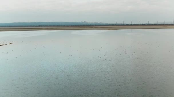 Top view of ducks floating on lake. Shot. Wild flock of ducks swims on lake in cloudy weather. Panoramic view of ducks on lake with distant horizon of gray city in cloudy weather