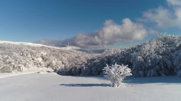 Anténa pro cestu zasněženou krajinou s okolní pole a lesa. Střela. Venkovské zimy oblast s silnice v zimním období obklopen lesních stromů, stopy od pneumatik auto na bílém sněhu