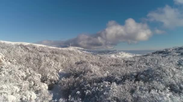 The aerial view of winter forest on heights of the birds flight against bright, blue, cloudy sky. Shot. Beautiful landscape of the snowy forest in winter, sunny day.