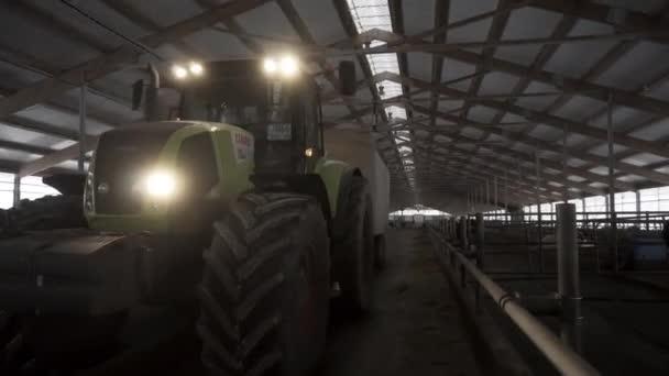 Krmení Galerie ve farmě skotu s krávy a jedoucího traktoru mezi řádky, koncepce zemědělství. Záběry. Traktor s distributorem krmné směsi pro dojnice jízdy na farmě.