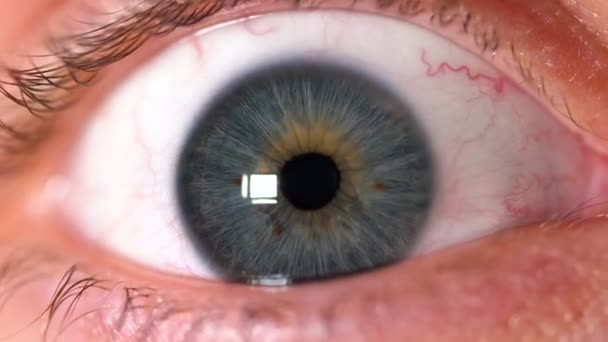 Close-up of a beautiful human blue eye. Peoples faces.