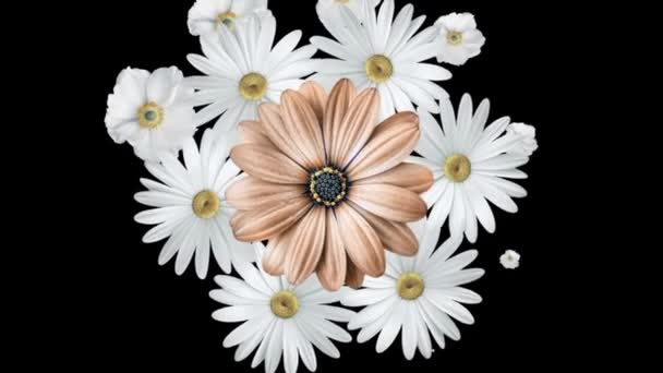 Animation Of Realistic White Daisies Moving Around With A Large Brown Flower In The Center Black Background Stock Video C Mediawhalestock 253467460 Daisy ai is the next generation of ai trading. animation of realistic white daisies moving around with a large brown flower in the center black background
