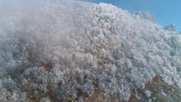 Zasněžené jehličnatých stromů s obrovské balvany v šedé mraky na vrcholu hory proti modré obloze. Střela. Krásná krajina