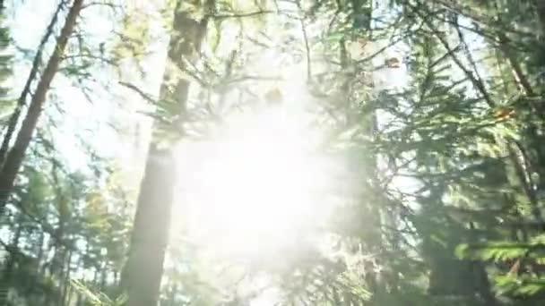 Krásný výhled z větví stromů jedle a borovice vztahuje webové a sušené listí v lese proti světle modrá obloha a sluníčko. Záběry. Detail