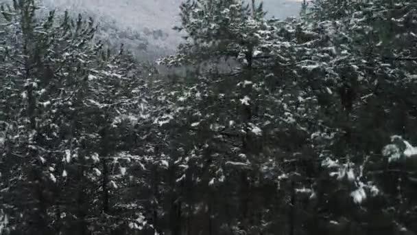 Letecký pohled na zimní hory pokryté zeleným zasněžené smrky. Střela. Zimní les v horách sníh na borovic, vánoční krajina