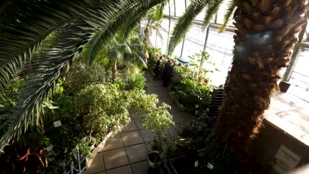 Top view of beautiful palm tree with its green wide leaves and other different plants inside the botanical garden. Stock footage. Greenery growing indoors in special conditions.