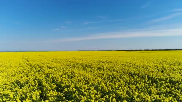 Side view of bright and lovely field with yellow flowers on blue cloudy sky background. Shot. Gentle rapeseed flowers growing on broad field in a summer sunny day.
