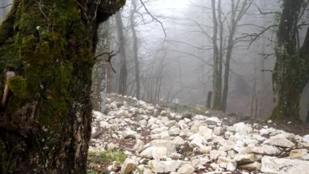Közelről fa törzs borított zöld moha a ködös erdei háttér, rejtély fogalmát. Stock Footage. Őszi erdő ködben és lejtő fehér kövekkel.