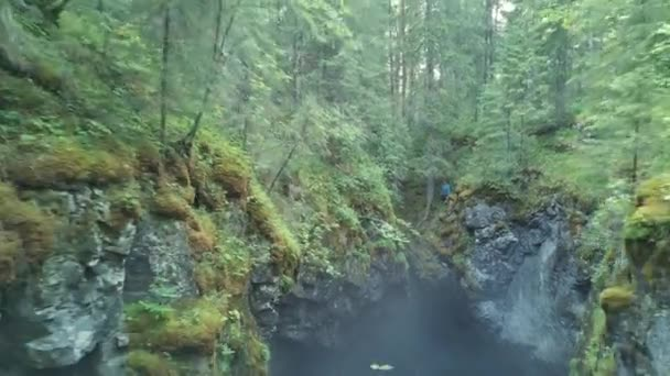 View of man standing near deep ravine with the debris of rocks and trees covered with moss in forest near the high old trees and shrubs. Stock footage. Beautiful view of mysterious forest