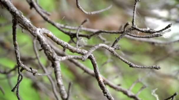 Houpá větev stromu v lese. Skladní záběry. Krásná divoká zvěř v lese