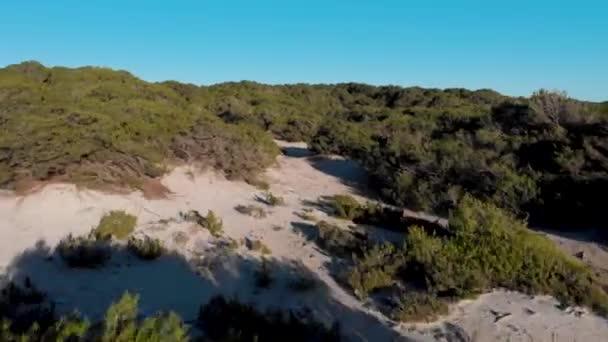 Légi a sivatag és a zöld bokrok egy nyári napsütéses napon. Művészet. Repül át bokrok és fák homokos talajon kék ég háttérben.