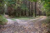 Fotografie Silnice vedoucí lesem. Lesní cesta v listnatých stojanu. Období podzimu