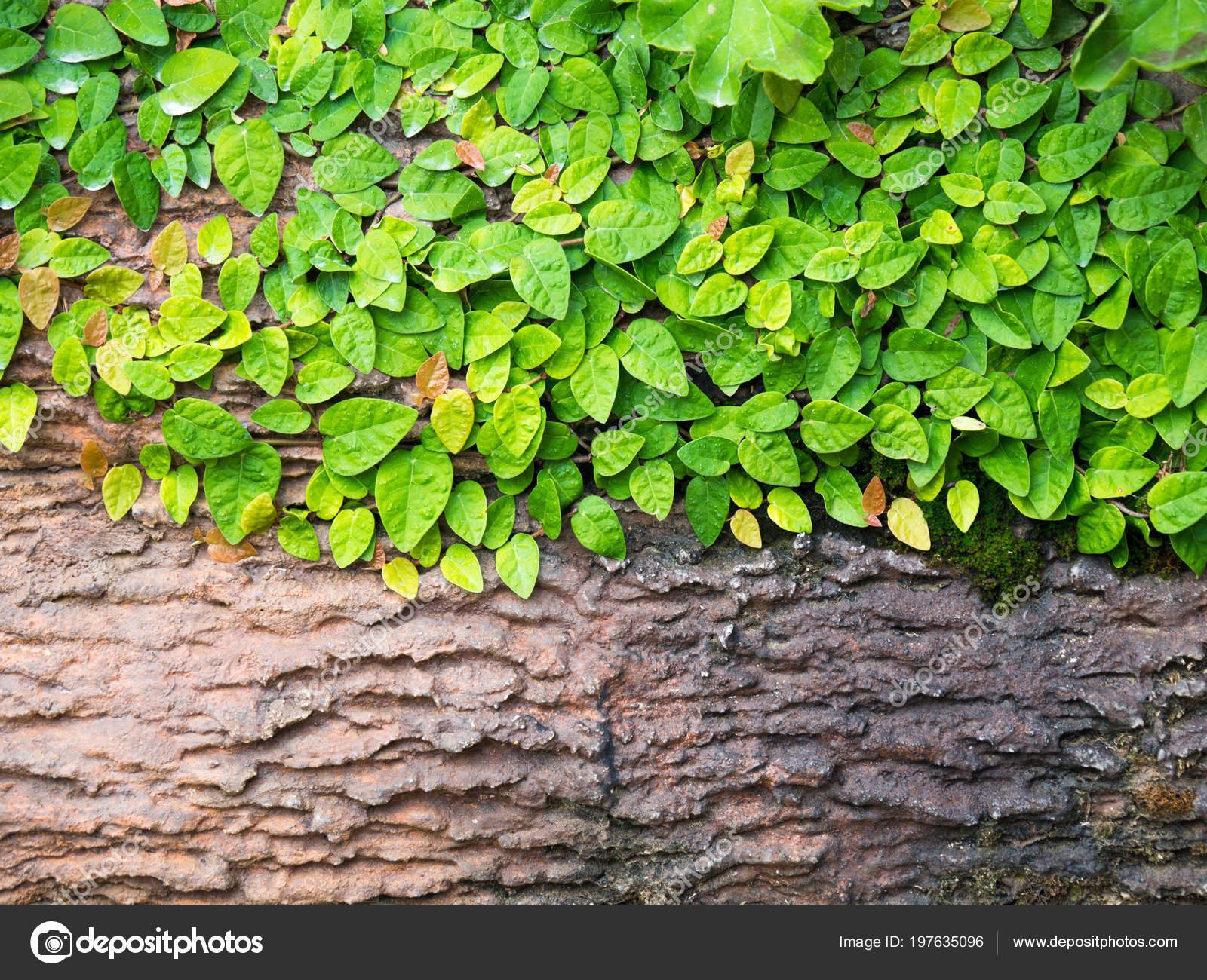Grüne Blätter Auf Holz Für Text Und Inhalt Input Copy — Stockfoto ...
