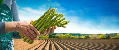 Bundle of green asparagus in hands of the farmer in front of asparagus field in spring