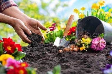 Planting spring flowers in sunny garden stock vector