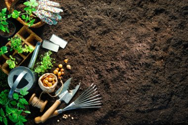 Gardening tools and seedlings on soil