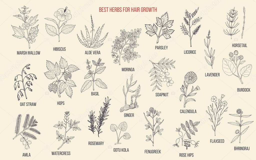 Best medicinal herbs for hair growth