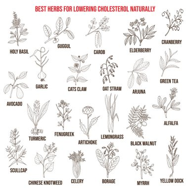 Best medicinal herbs for lowering cholesterol