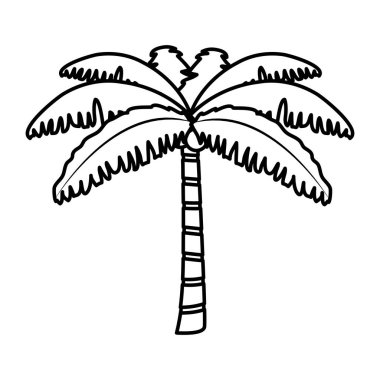 line tropical palm nature tree style vector illustration