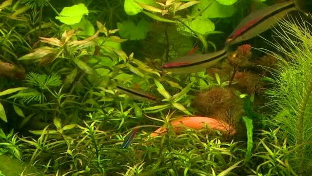 különböző halak úszni az akváriumban