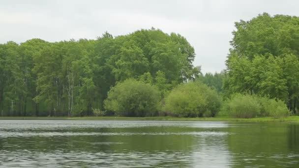 river landscape gulls Bay