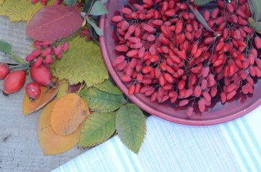 Full Cup of barberry berries on wooden boards in autumn assorted leaves and berries