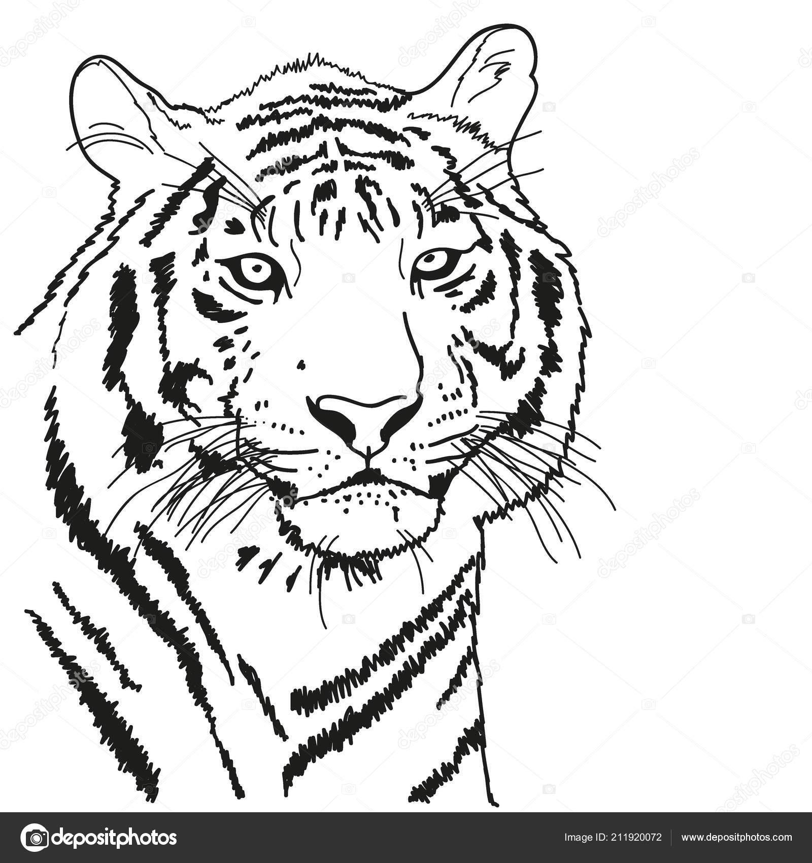 dibujada con un contorno negro, tigre para colorear — Vector de