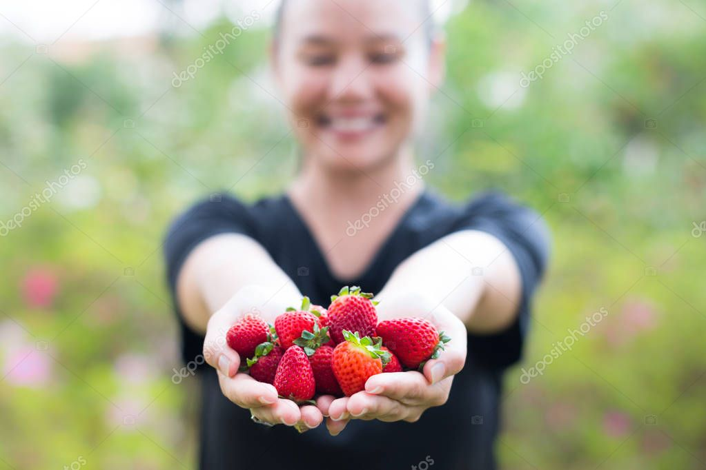 Closeup of a handful of perfectly ripe strawberries being held by a happy girl
