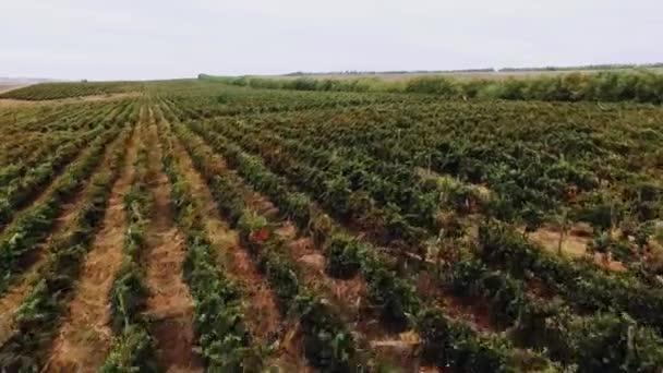 Letecký pohled na vinice vinařství