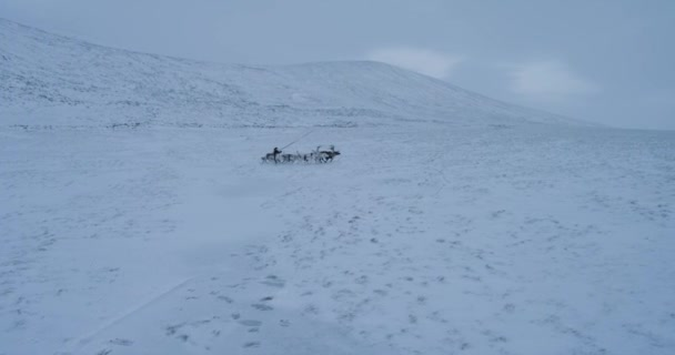A Arctic man on a sleigh have a ride with lots of reindeers in the middle of tundra.