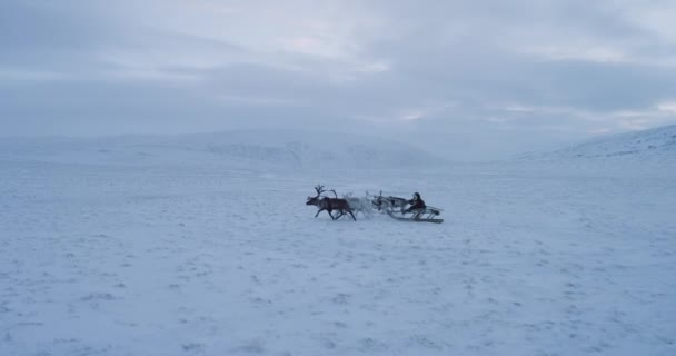 Siberian man in the tundra with his beautiful reindeers have a ride with sleigh amazing view from drone,