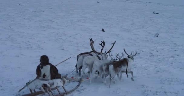 Gyors hajtás REIT és szibériai férfi egy szán a közepén sarkvidéki Tundra